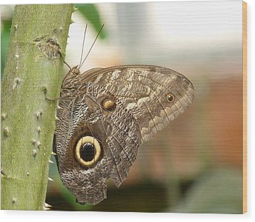 Wood Print featuring the photograph Giant Owl Butterfly by Lynn Bolt