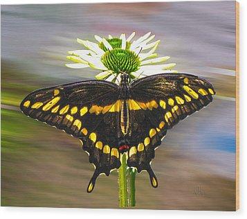 Giant Swallowtail 2 Wood Print