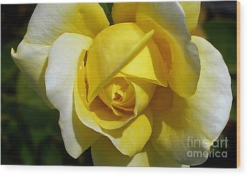 Gina Lollobrigida Rose Wood Print by Kaye Menner