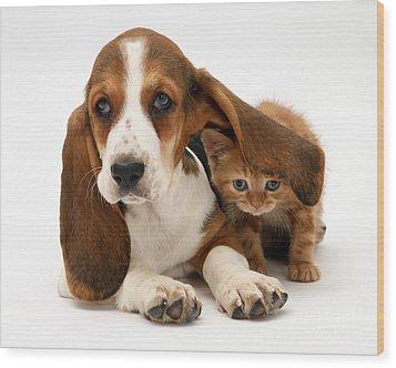 Ginger Kitten And Basset Puppy Wood Print by Jane Burton