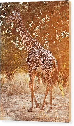 Giraffe At Sunset Wood Print by Gualtiero Boffi