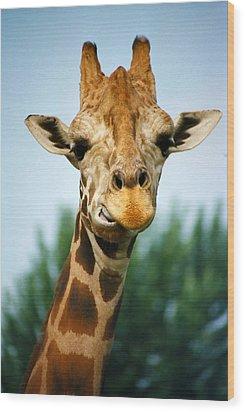 Giraffe Wood Print by CJ Clark