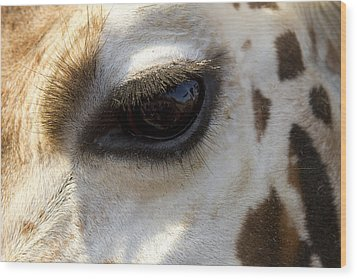 Wood Print featuring the photograph Giraffe Eye by Carrie Cranwill