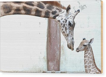 Giraffe Wood Print by Floridapfe from S.Korea Kim in cherl