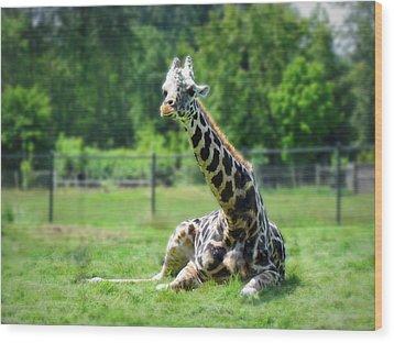 Giraffe II Wood Print by Eva Kondzialkiewicz