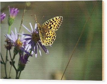 Glacier Butterfly Wood Print by Marty Koch