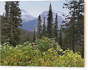 Glacier Scenery Wood Print by Susan Kinney