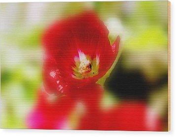 Gladiolus Wood Print by Toni Hopper
