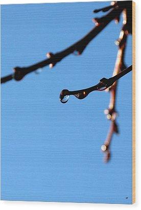 Glistening Dewdrops Wood Print by Will Borden