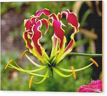 Gloriosa Lily Wood Print by Rod Ismay