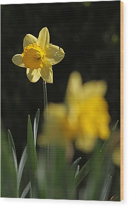 Glorious Daffodil Wood Print by Juergen Roth