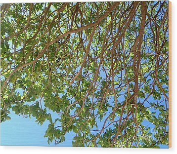 Glorious Nature Wood Print by Samantha Mills