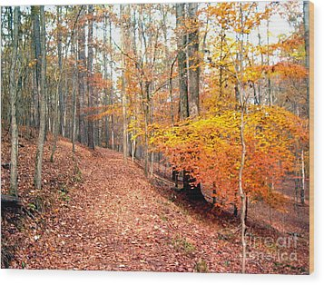 Wood Print featuring the photograph Glowing Beeches by Gretchen Allen