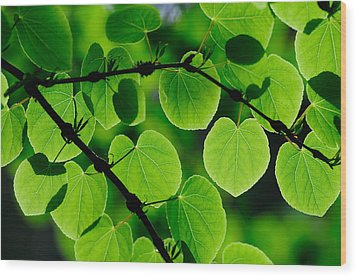 Glowing Heart Shaped Leaves Wood Print by Hegde Photos