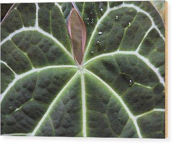 Glowing Leaf Wood Print by Rosalie Scanlon