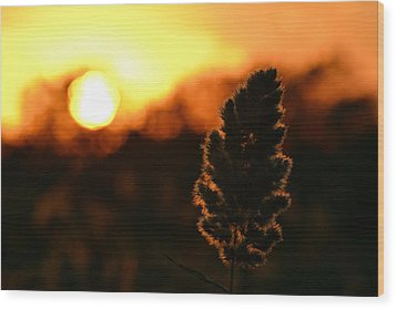 Glowing Leaf Wood Print by Zawhaus Photography