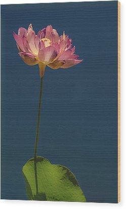 Glowing Lotus Wood Print by Jill Balsam