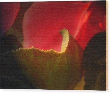 Glowing Petals Wood Print
