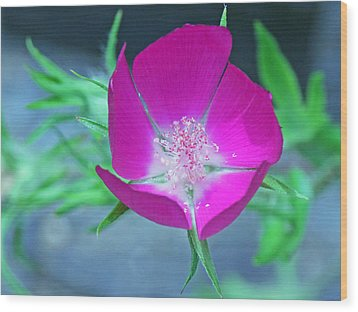 Glowing Poppy Wood Print by Becky Lodes