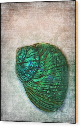 Glowing Seashell Wood Print by Judi Bagwell