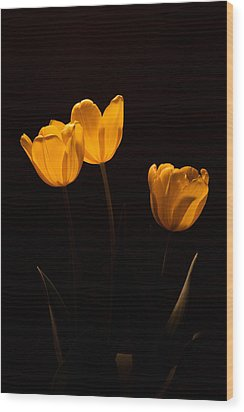 Wood Print featuring the photograph Glowing Tulips by Ed Gleichman