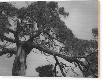 Gnarly Cedar Tree Wood Print by Teresa Mucha