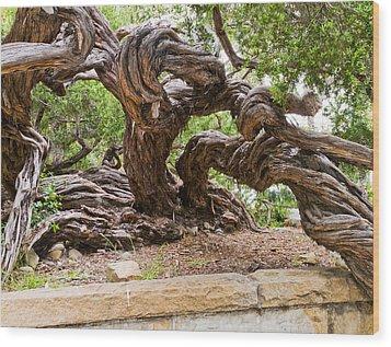 Gnarly Tree I Wood Print by Bernard  Barcos