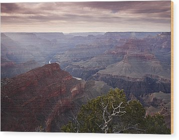 Gnarly Tree In The Canyon Wood Print by Andrew Soundarajan