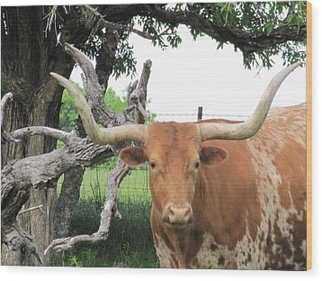 Wood Print featuring the photograph Go Bevo by Shawn Hughes
