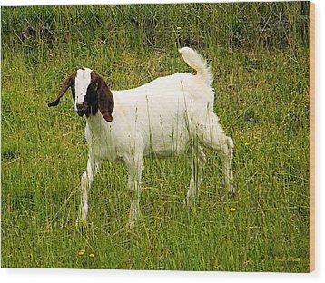 Goat Fun Wood Print by Wendy McKennon