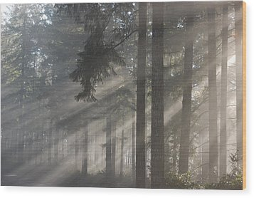 Gods Rays Wood Print