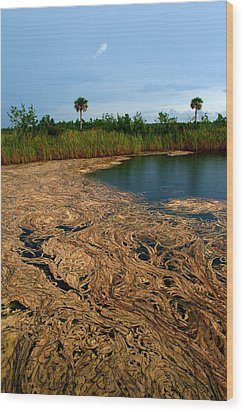 Golden Algae Wood Print by Jessica Jandayan