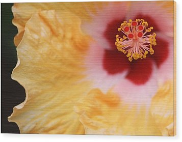 Golden And Crimson Hibiscus Wood Print