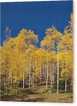 Golden Aspen Stands Wood Print by Stephen  Johnson