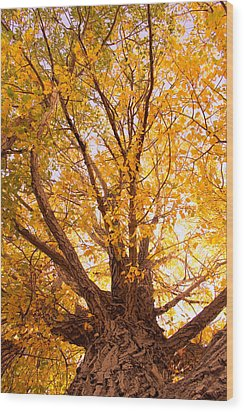 Golden Autumn View Wood Print by James BO  Insogna