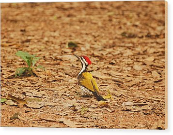 Wood Print featuring the photograph Golden Backed Woodpecker by Fotosas Photography