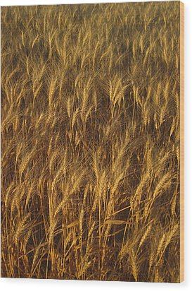Golden Beauty Wood Print