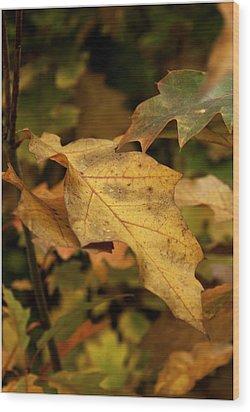Golden Brown Wood Print by Nigel Jones