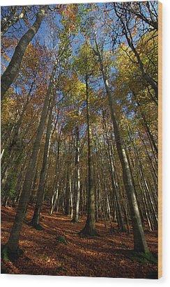 Golden Canopy Wood Print
