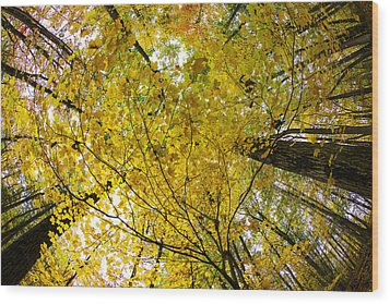 Golden Canopy Wood Print by Rick Berk