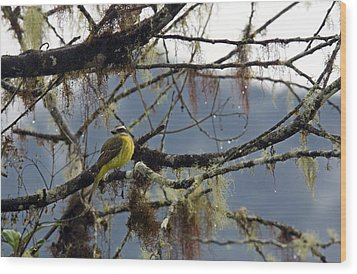 Golden-crowned Flycatcher Wood Print by Bob Gibbons