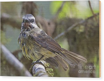 Golden--crowned Flycatcher Wood Print