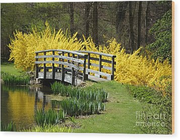 Golden Days Of Spring Wood Print by Living Color Photography Lorraine Lynch