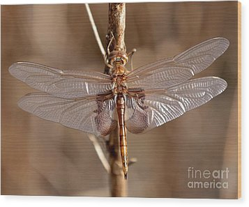 Golden Dragonfly Wings Wood Print by Carol Groenen