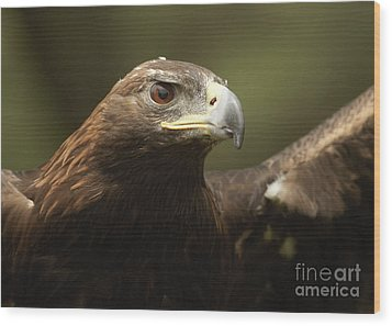 Wood Print featuring the photograph Golden Eagle by Doug Herr