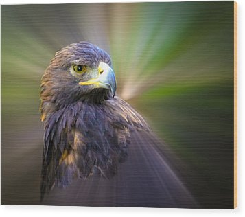 Golden Eagle Fade Wood Print by Steve McKinzie