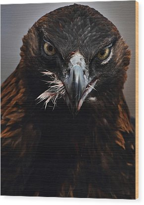 Golden Eagle Feeding Wood Print by Pat Gaines