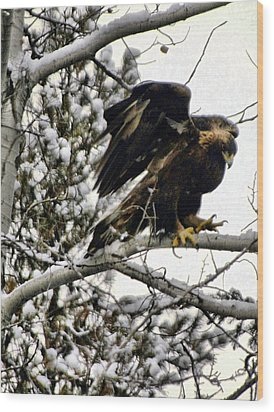 Golden Eagle Stretching Wood Print by Don Mann