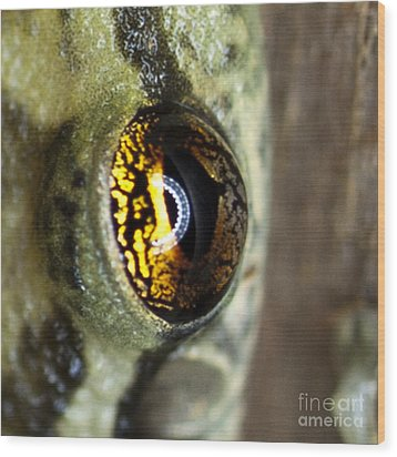 Wood Print featuring the photograph Golden Eye by John Burns