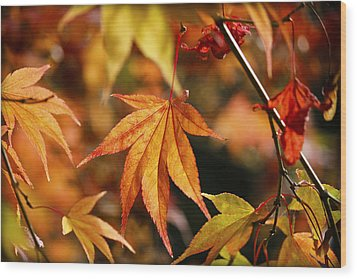 Wood Print featuring the photograph Golden Fall. by Clare Bambers